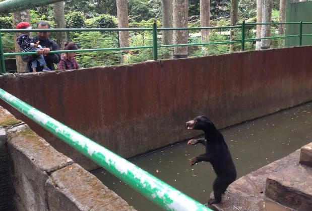 Pengelola Kebun Binatang Bandung